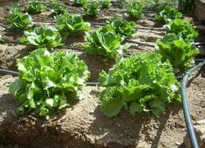 ¿Quieres cultivar un huerto ecológico? En Toledo te enseñan cómo hacerlo