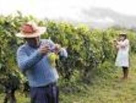 Ricardo Monreal presenta demanda contra acaparadores de maíz