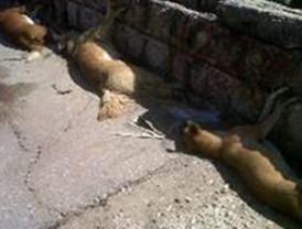 Sancionarán a autoridades por matanza de perros