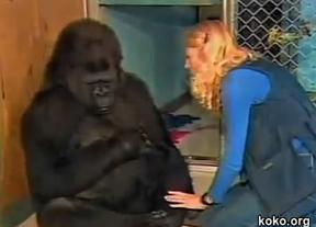 Un gorila llora al conocer la muerte de un gato al que quería (vídeo)