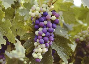 Eno-emprendedores 2020 se presenta en el templo del vino, La Rioja