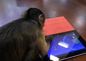 'Angry Birds Space', el videojuego que gusta hasta a los monos