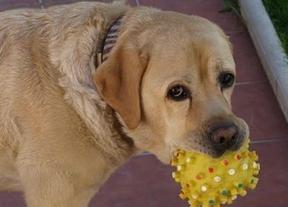 'SalpiCan', el evento acuático canino que llega a El Casar (Guadalajara)