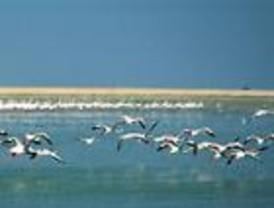 Cinco millones de euros para ella y restaurar ecosistemas