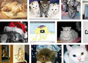 El 'super cerebro' creado por Google busca gatos por Internet