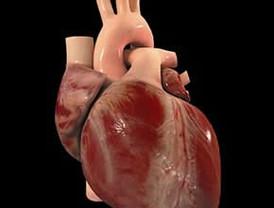 Grasa del corazón podría regenerar órganos infartados