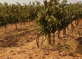 Castilla-La Mancha hace públicas sus reivindicaciones en la Política Agraria Común
