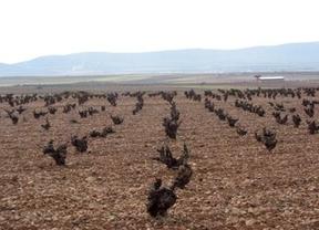 Cooperativas de Castilla-La Mancha confían en que Bruselas no reduzca el presupuesto de la PAC