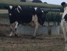 Miles de ganaderos desafían a la lluvia en Valladolid