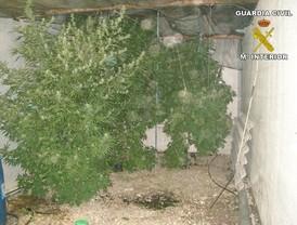 La Guardia Civil desmantela una plantación de marihuana en La Carlota y detiene a una persona
