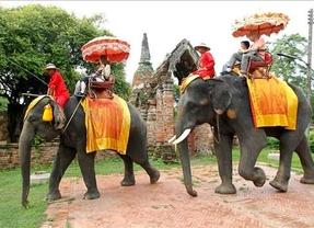 Un mapa interactivo advierte de malas prácticas turísticas con animales