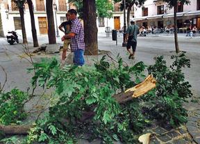 ¿Dónde han caído las ramas en Madrid? Vea el mapa