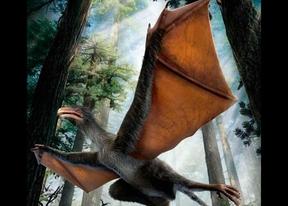 Hallan en China un extraño dinosaurio con alas de murciélago