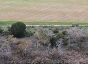 Ecologistas en Acción dice que la Junta podría vender la cuarta parte de los montes públicos