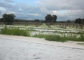 ASAJA Ciudad Real estima en más de 20.000 las hectáreas de cultivos afectadas por el granizo