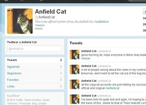 Un gato inglés, la nueva sensación de Twitter