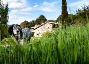 Admisión de mascotas y cercanía a la playa, claves para el turismo rural en agosto