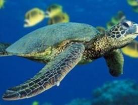 6 Muertos y 90 intoxicados por comer carne de tortuga protegida en Micronesia