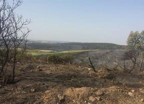 El PSOE pedirá a la consejera de Agricultura que explique los incendios de Guadalajara