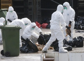 La gripe aviar ha vuelto a Europa, pero... ¿hay o no que alarmarse?