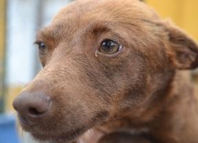 Denuncian numerosos envenenamientos de perros y gatos en Puertollano