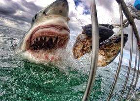 La foto de un tiburón blanco se convierte en viral en Internet