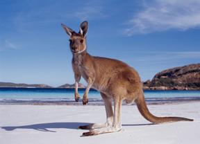 Australia ofrece el 'mejor empleo del mundo'  los jóvenes viajeros