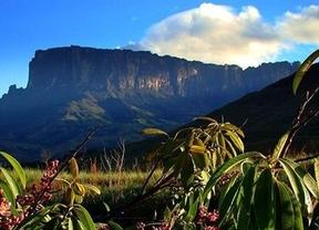 ¿Cuáles son las áreas protegidas más irremplazables del mundo?
