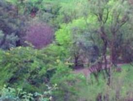 Murcia tiene 5.000 nuevos árboles gracias a los clientes de Aguas de Murcia dados de alta en la factura electrónica