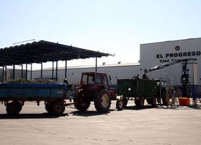 'El Progreso' de Villarrubia de los Ojos abre de nuevo sus puertas a la recogida de uva
