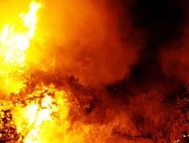 Adolescente admite su culpa en el incendio forestal de Israel