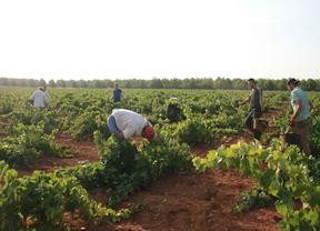 Arranca la vendimia en La Mancha con una semana de retraso