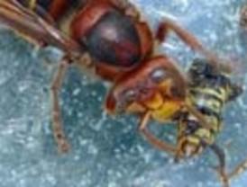 Imagen de una avispa