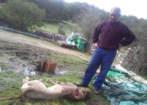 Los ganaderos de Guadalajara denuncian la