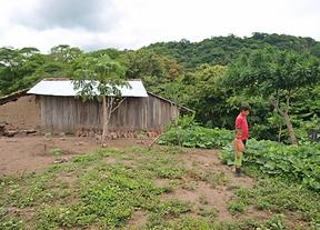 La roya del caf� en Nicaragua acabar� con 90.000 empleos de jornaleros