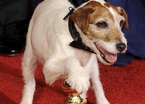 Uggie, el perro de 'the Artist', cenará con Obama en la Casa Blanca