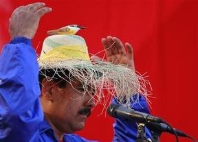 Venezuela, entre el surrealismo y el esperpento: Maduro trabaja en campaña con un pajarito en la cabeza