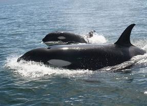 Los principales destinos mundiales para avistar ballenas