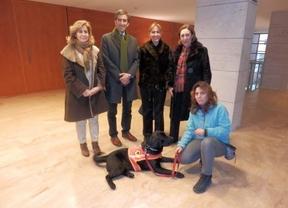 Perros labradores para trabajar en la integración de niños tutelados
