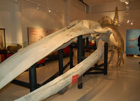 El Museo de Ciencias Naturales de Madrid ya tiene