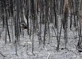La Xunta da por controlado el incendio que ha calcinado y arrasado 750 hectáreas de As Fragas