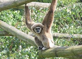 United Airlines, por la protección de los animales: no transportará monos para laboratorios científicos