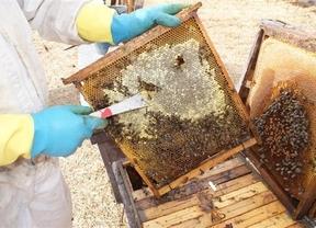 La Marca de Calidad 'Miel de Cuenca' llegará al mercado esta primavera