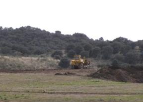 Ecologistas denuncia irregularidades y daños ambientales en la plantación de viñedo en Guadamur