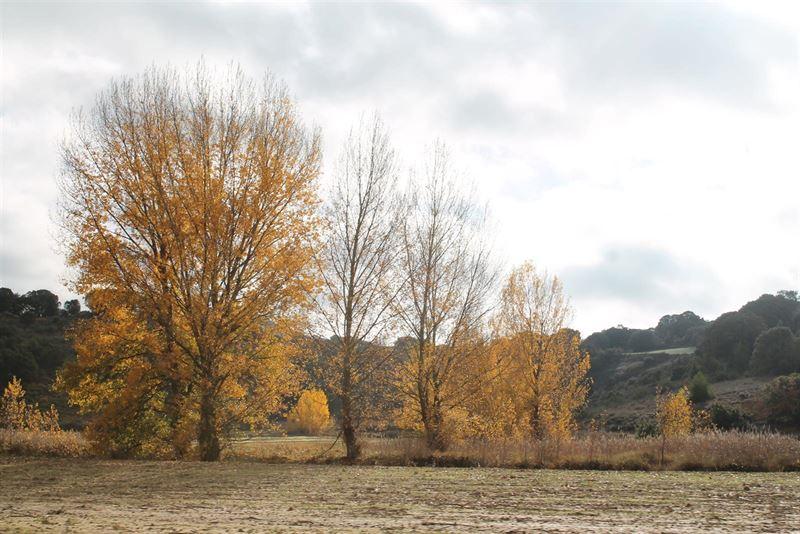 El otoño comenzará el próximo miércoles y el cambio de hora será el 25 de octubre