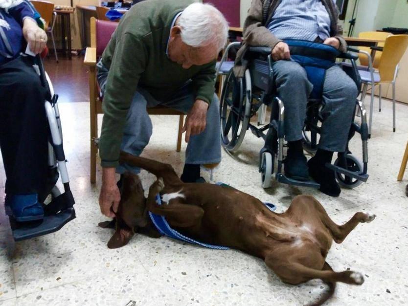 Más de 200 mayores han participado en el Programa de Terapia Asistida con Perros