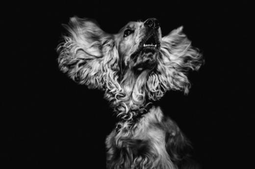 'Cuidado con el perro': el oprobioso e incesante laberinto de los abusos a la mujer
