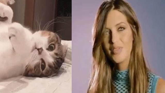 El gato que triunfa más que Sara Carbonero