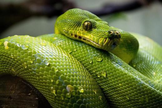 Horóscopo chino 2019 Serpiente: año de lujo