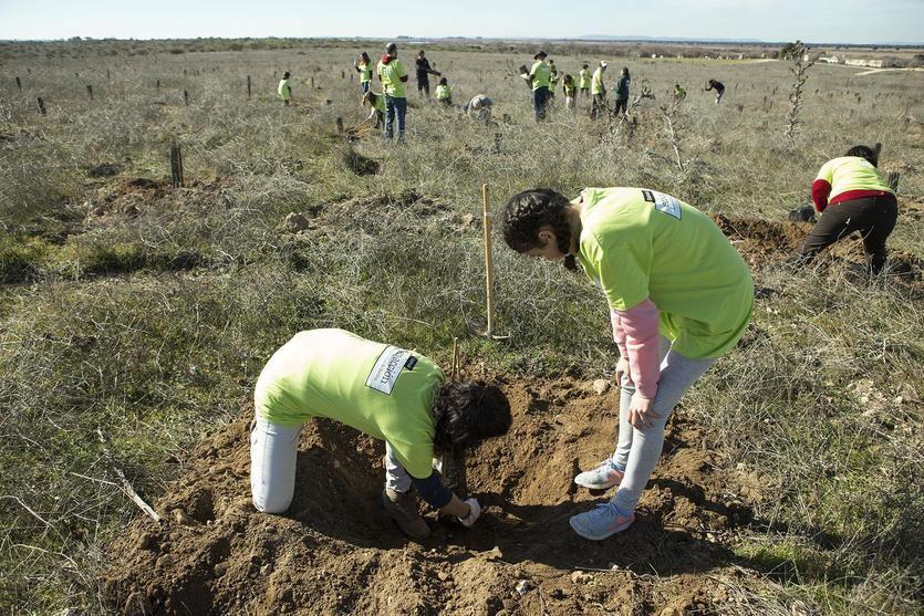 Bankia y WWF España recuperan en 3 años 63 hectáreas del Parque Nacional de Las Tablas de Daimiel